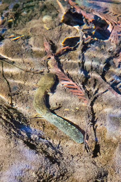 Salamander4784