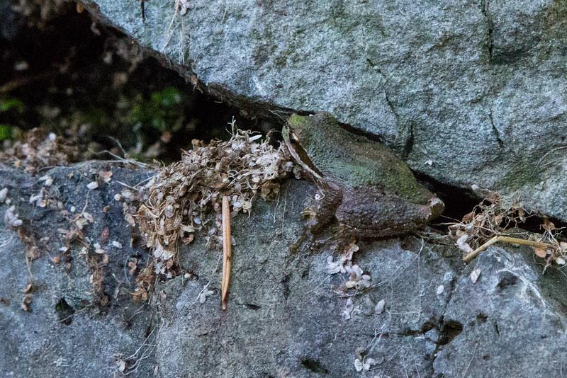 Frog4788