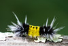 Caterpillar4824