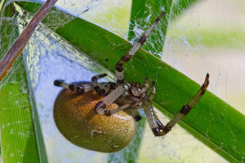 Spider4842