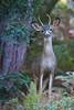 Deer0601