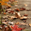 Fall hiking at ACRES Land Trust: Ralph F. Gates Nature Preserve near Crooked Lake.