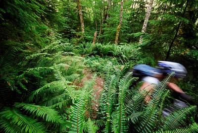 Crumpit Woods. Squamish, BC