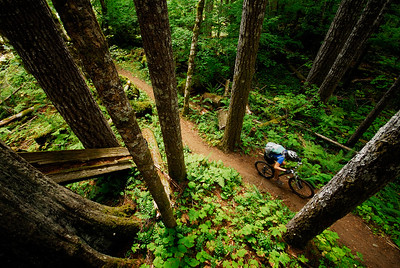 mountain biking at Mt. St. Helens. Woodland, USA