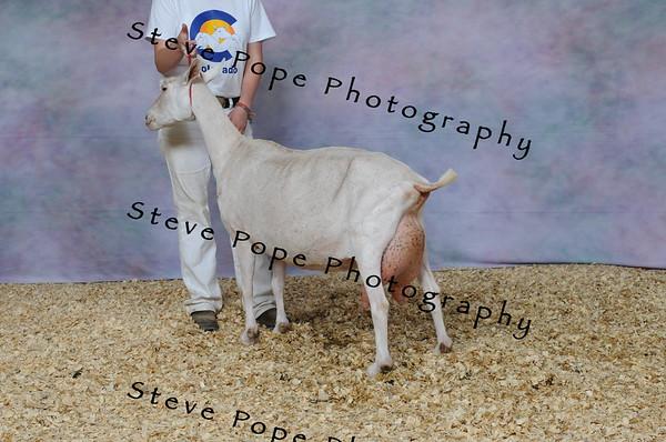 2013 capricornfarms 07410