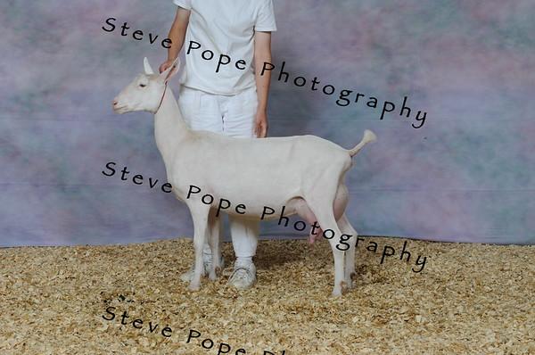 2013 capricornfarms 07420