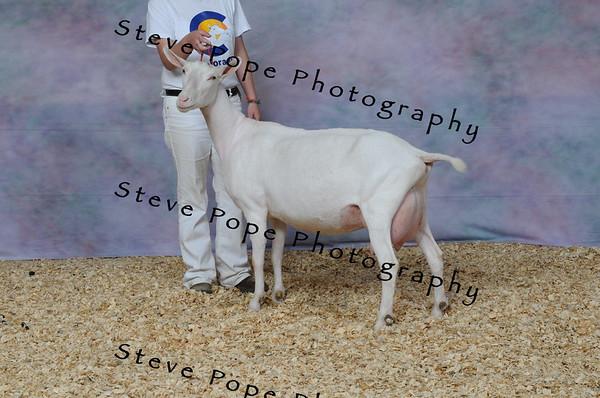 2013 capricornfarms 06632