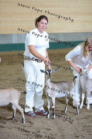 2013 recordedgrade jr show 03905