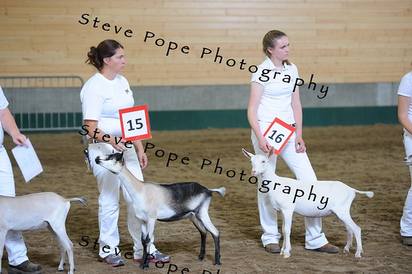 2013 recordedgrade jr show 03890