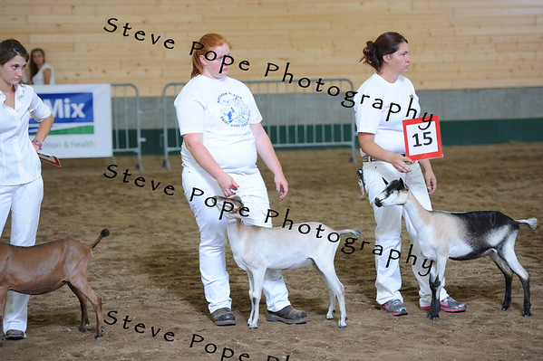 2013 recordedgrade jr show 03889