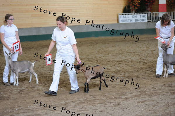 2013 recordedgrade jr show 03883
