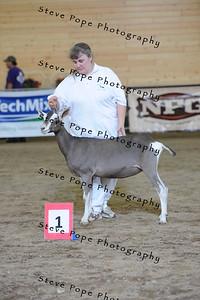 2013 sable jr show 12143
