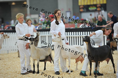 2014 Int. 1 Showmanship