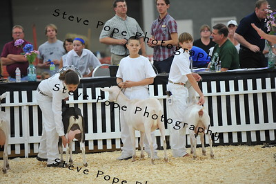 2014 Showmanship Fitting Team