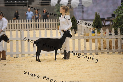 2015 Int. 1 Showmanship