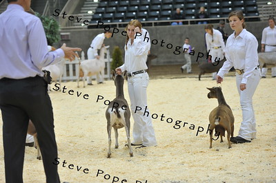 2015 Int. 2 Showmanship