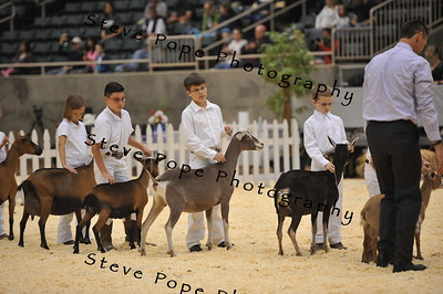 2015 Jr. Showmanship