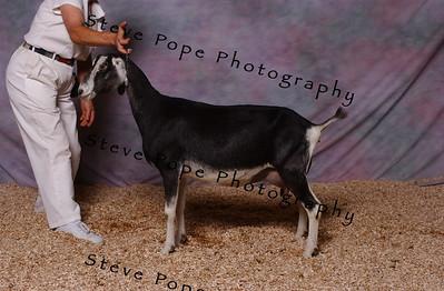 2006 Coploy