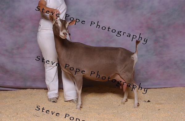 2007 Rec 3,MILK HAJDIK 5220