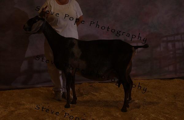 07 Nub Hendrickson 10750
