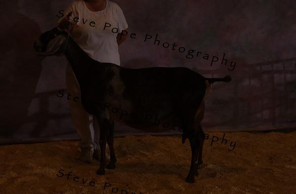 07 Nub Hendrickson 10751