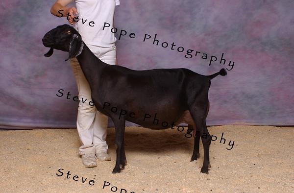 07 Nub Hendrickson 10699
