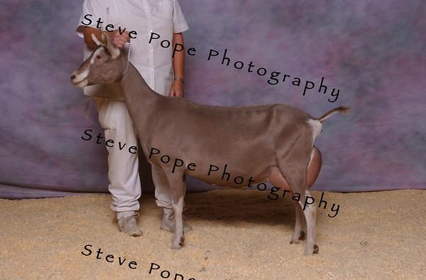 2007 Rec Hausman 5166