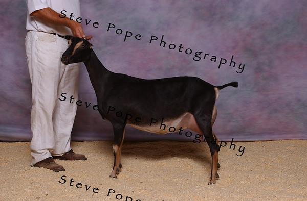 2007 Obe Kajewski 7435