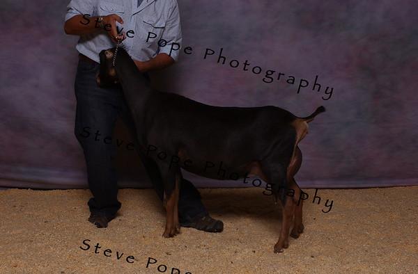 2007 Lam Kinney 7494