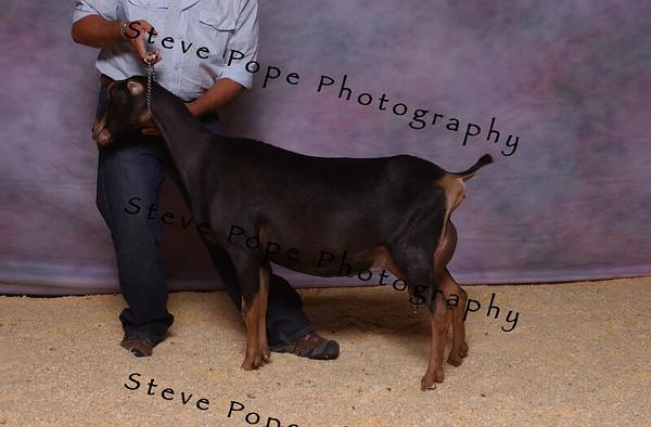 2007 Lam Kinney 7492