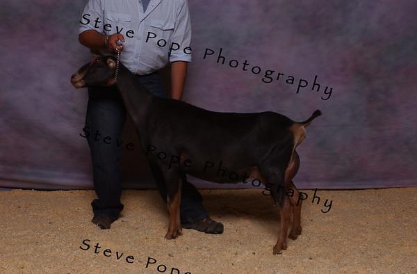 2007 Lam Kinney 7497