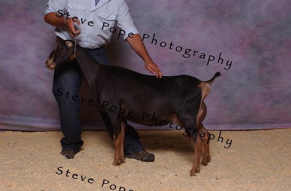 2007 Lam Kinney 7490