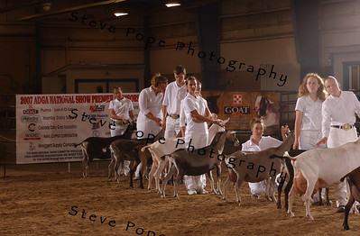 2007 Showmanship Fitting Team