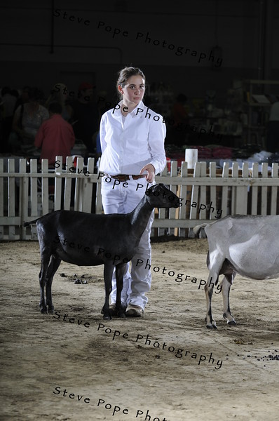 Intermediate 1 Showmanship