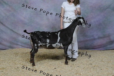 2010 National Show