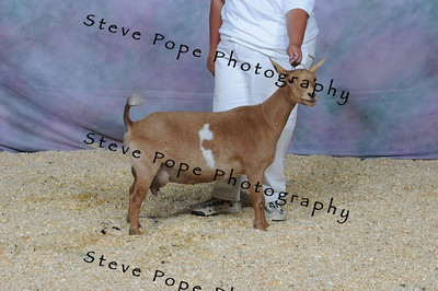 2012 National Show