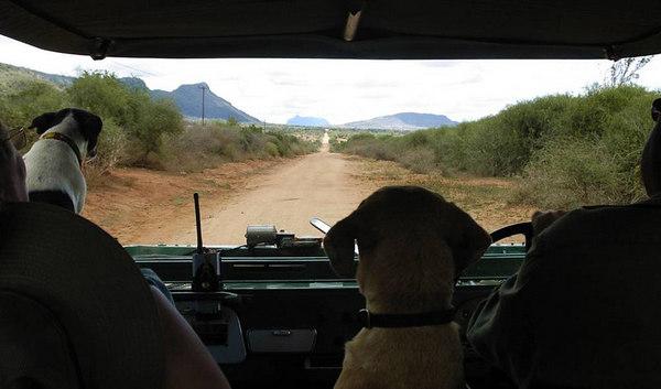 061003a Rukinga & Wildlife Works
