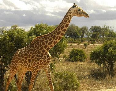 061004a Tsavo East National Park