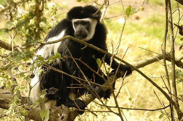 061008a Arusha National Park
