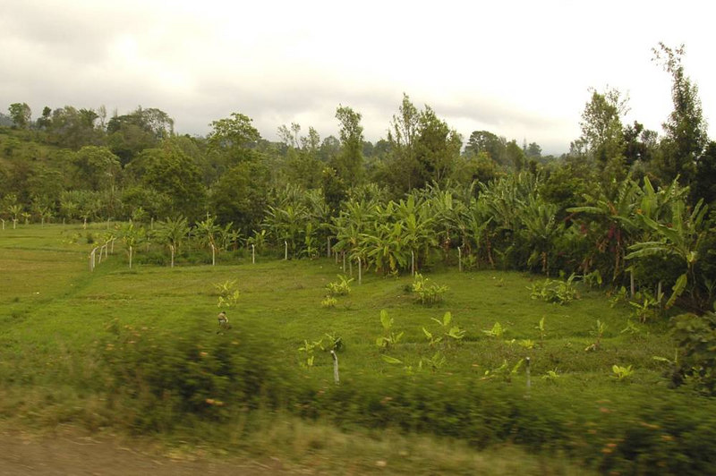 x_61 scenery out the car window