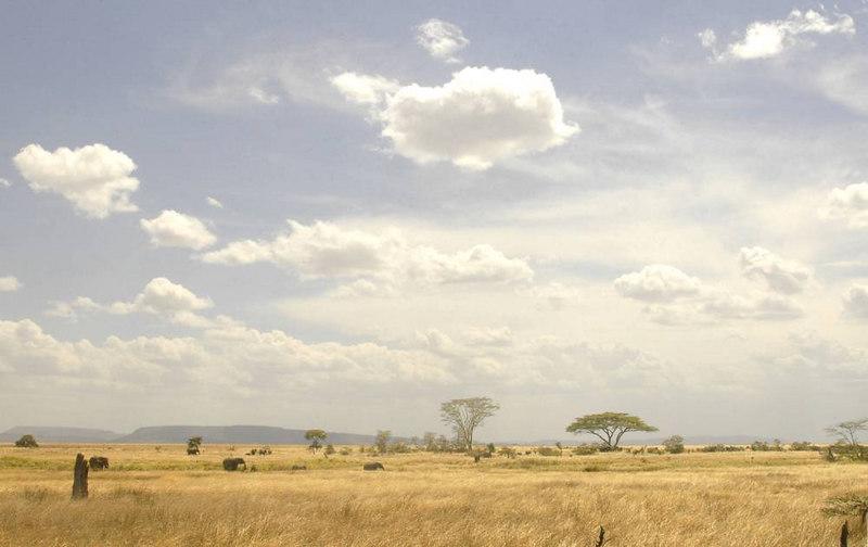 x_002 distant elephants across the savannah