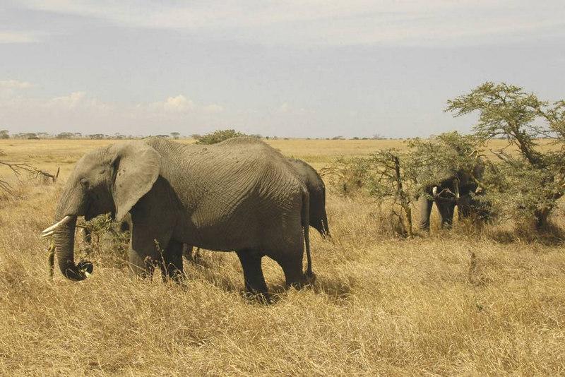 x_076 elephants up close