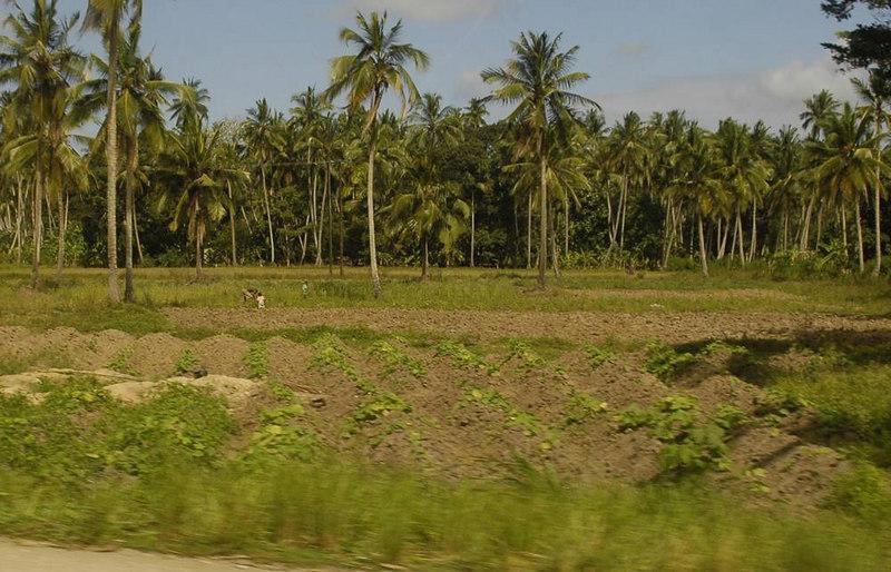 x_44 farmland along the road