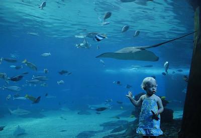 4th day - the Aquarium