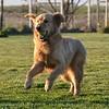 Kota, a ball dog for sure.