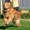 Thunder. This is a sad story. Thunder was part of a bonded pair but Trinity recently passed due to her cancer.