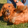 "Lunden (Lundon?) could be Emma's sister.<br /> <br /> <br /> <a href=""http://www.homewardboundphotos.com/HBGRR/The-Dogs/Emma/17127425_3gPJLh#1297871122_7NKZSpV"">http://www.homewardboundphotos.com/HBGRR/The-Dogs/Emma/17127425_3gPJLh#1297871122_7NKZSpV</a>"