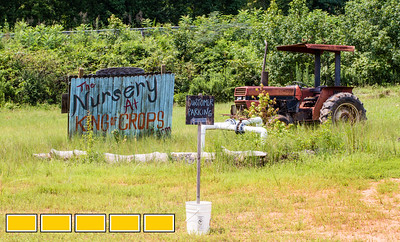 King of Crops is a working farm still in its beginning stages.  Stephen Dobek manages the farm in Winston, GA where ingredients for King of Pops will be sourced.  Some crops, like basil and blackberries, already are part of the pops production.  (Jenni Girtman / Atlanta Event Photography)