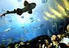 aquarium replace