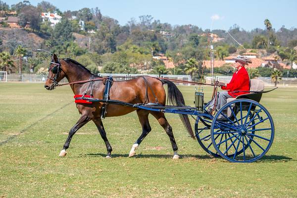 Horsetrader